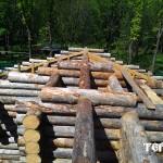 125_druby_iz_zimnego_lesa