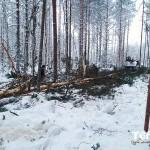 139_valka_lesa_karelia