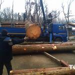 50_dostavka_sosny_iz_karelii
