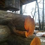 8_sosna_kelo_karelia